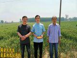 大慶龍鳳本地有風水大師高人嗎 口碑好的風水師是周金天