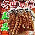 淄博市回收冬蟲夏草 張店 淄川 周村周邊商家